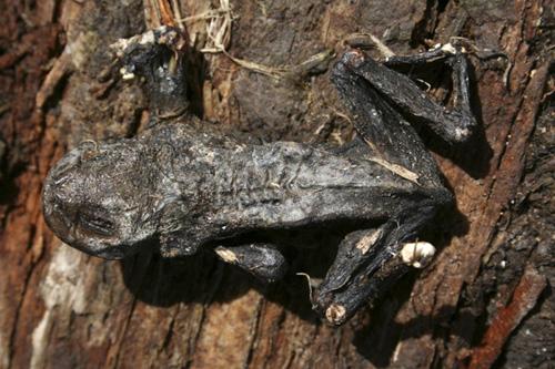 mna-frog-corpse1.jpg