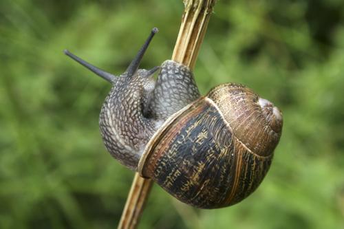 mna-hodbarrow-snail1.jpg