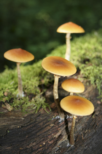 mna-dibbinsdale-orange-fungi2.jpg