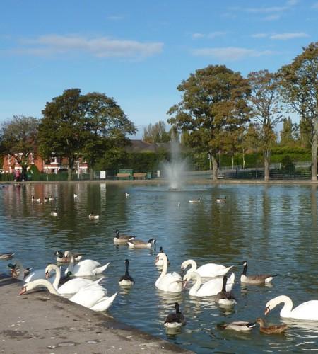 widnes-swans.jpg
