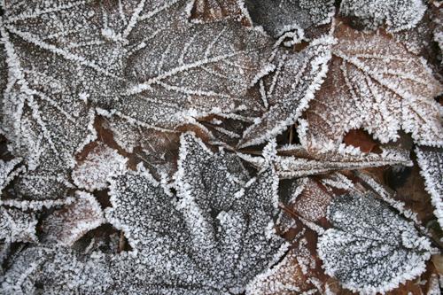 mna-martin-mere-frozen-leaves1.jpg