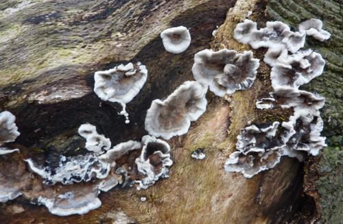 odd-fungus.JPG