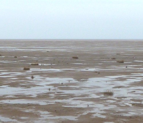 Spartina grass on Hoylake beach