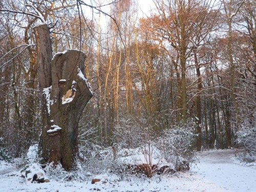 eastham-woods-in-snow.jpg