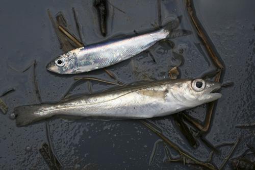 mna-marisa-fish1.jpg