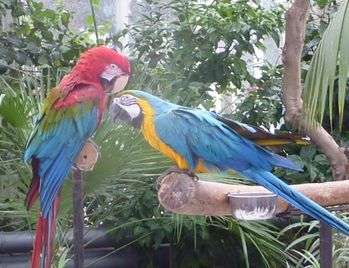 Parrots in the Palm House