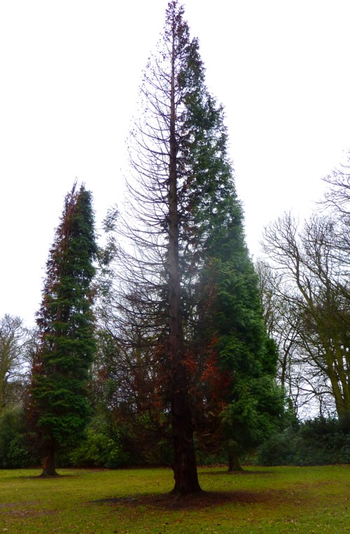 burnt-cypresses-allerton-towers.jpg