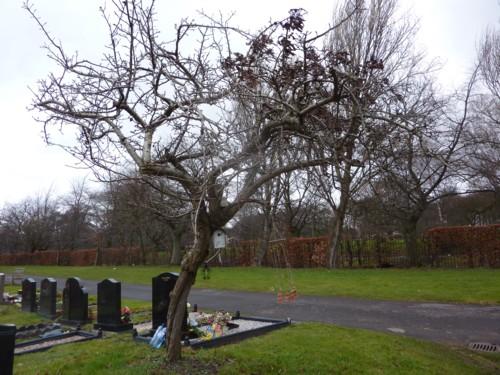 medlar-tree-allerton-cemetery.jpg