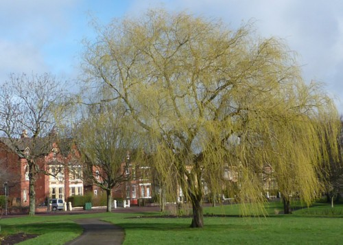 newsham-park-willow.jpg