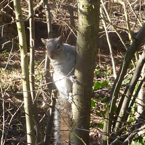 sefton-park-squirrel.jpg