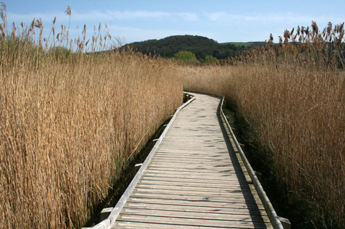 mna-conwy-reedbed.jpg