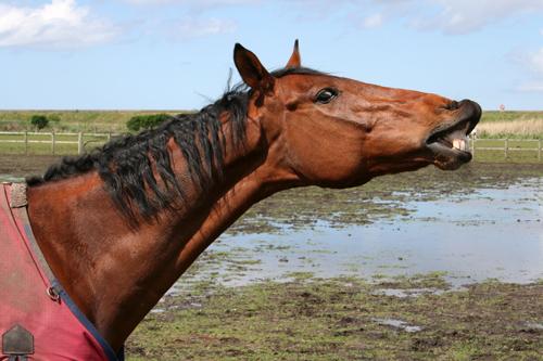 mna-leasow-horse.jpg