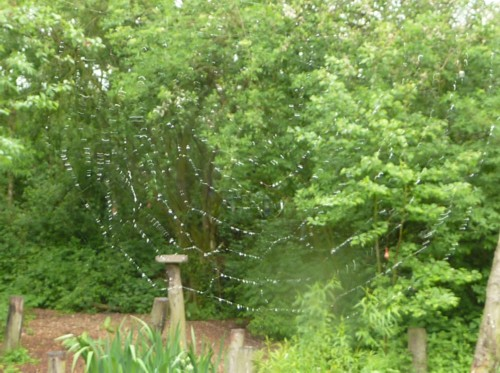 orrell-wp-cobweb-and-bird-table.jpg