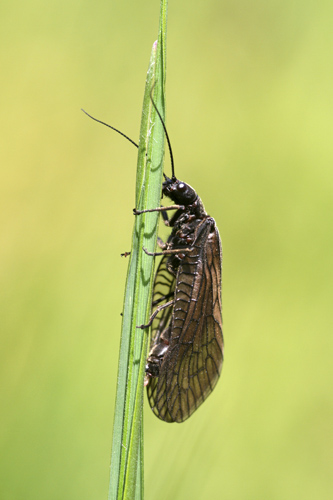 mna-alder-fly1.jpg