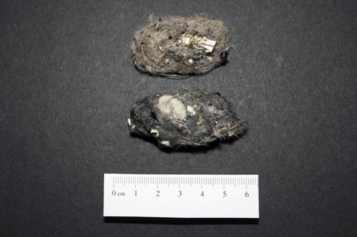 mna-stocks-bird-prey-pellet1.jpg