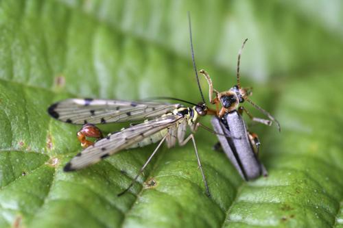 mna-stocks-res-scorpion-fly1.jpg