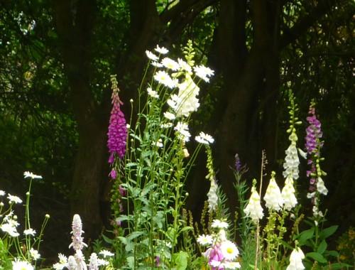 sefton-meadows-churchyard.jpg