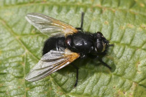 mna-minera-noonday-fly1.jpg