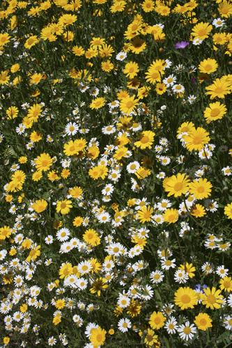 mna-ness-wildflowers.jpg