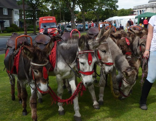 port-sunlight-donkeys.jpg