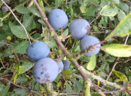 neston-sloes.jpg