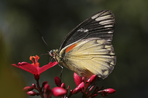 mna-indonesia-butterfly1.jpg