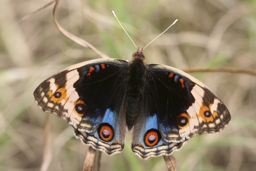 mna-indonesia-butterfly2.jpg