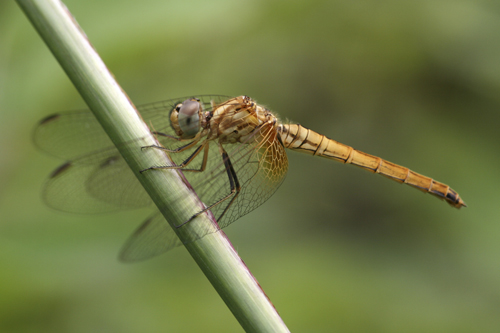 mna-indonesia-dragonfly3.jpg