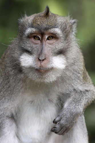 mna-indonesia-macaque5.jpg