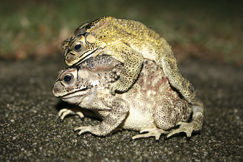 mna-indonesia-toad4.jpg