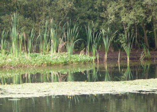 msw-reed-reflection.jpg
