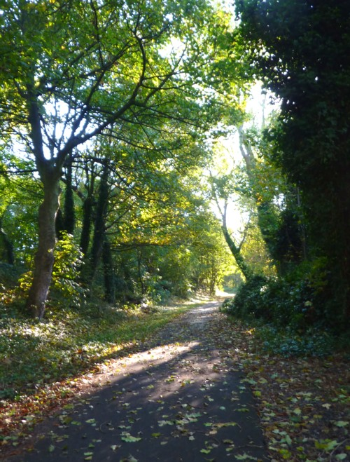 halewood-path.jpg