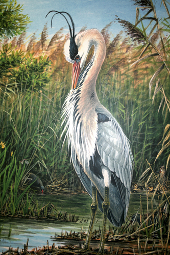 mna-leighton-moss-heron-illustration1.jpg
