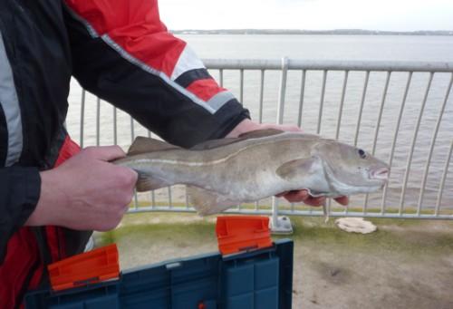 otterspool-fish-1.jpg