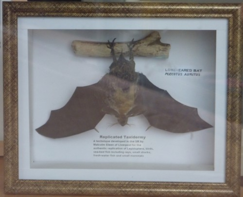 01-sefton-park-bat-in-case.jpg