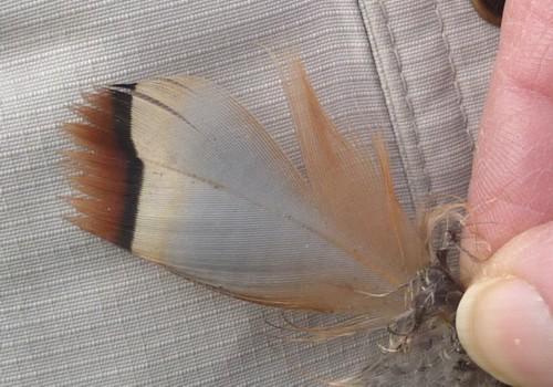 05-sefton-meadows-rlp-feather.jpg