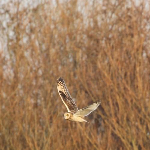 charles-russel-owl-reduced-for-blog.jpg