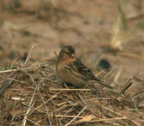 chris-derri-twite-fairhaven-jan-2012.jpg