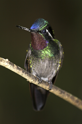 mna-costa-rica-hummingbird1.jpg