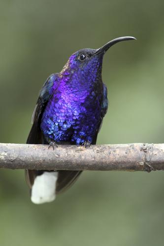mna-costa-rica-hummingbird5.jpg