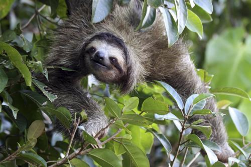 mna-costa-rica-sloth1.jpg