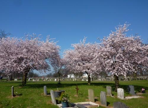 08-sugar-brook-cherry-trees.jpg