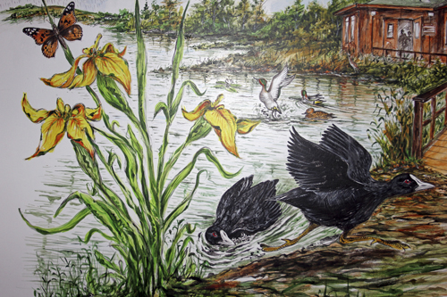 mna-mere-sands-coot-painting1.jpg