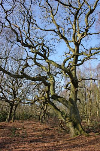mna-mere-sands-gnarled-tree1.jpg