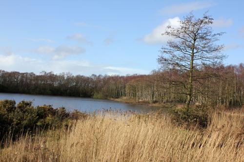 mna-mere-sands-reeds1.jpg