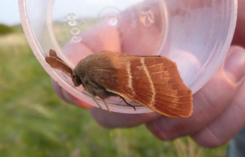 mna-1-eggar-moth.jpg