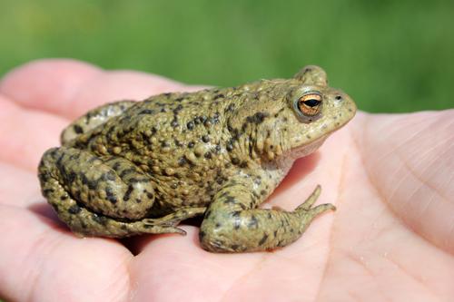 mna-brockholes-toad.jpg