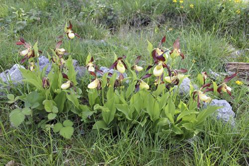 mna-gaitbarrows-ls-orchid1.jpg
