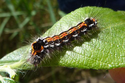 mna-lm-caterpillar1.jpg