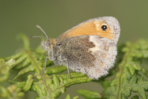 mna-small-heath1.jpg